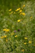 Flower-0532