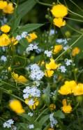Flower-0544
