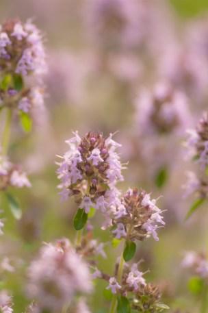 Flowers-1496