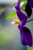Flowers-1511