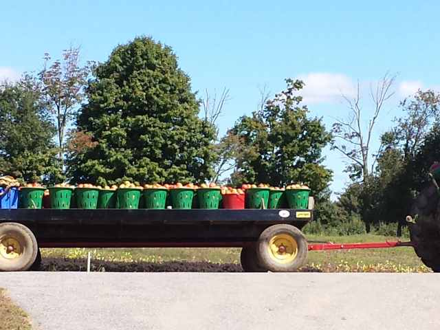 tomatoes on a wagon