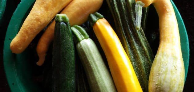 Yellow straight neck, Zucchini, Cousa, Romanesco, Zephyr