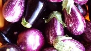 eggplants zebra, classic
