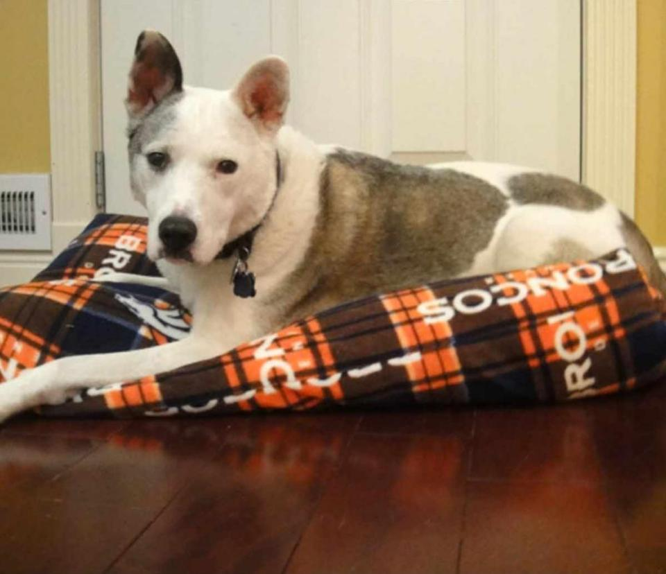 Crafts for Dogs Comfortable Bed