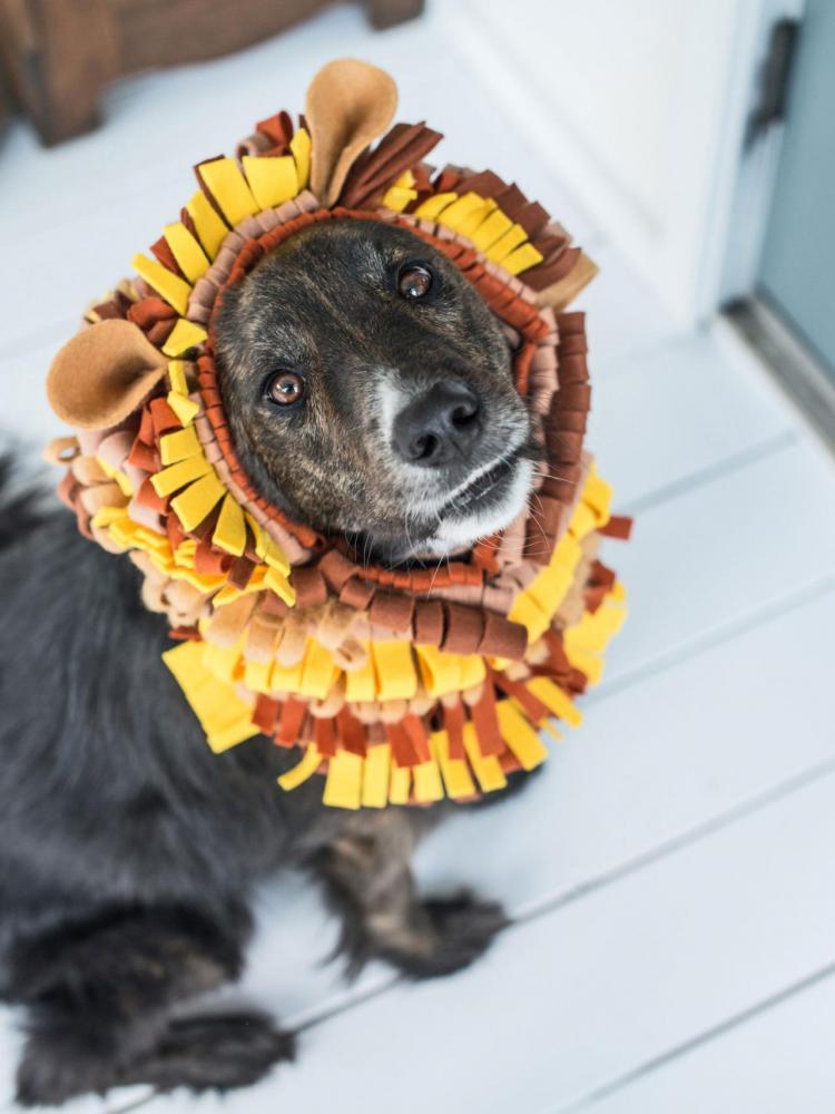 Crafts for Dogs Lion Mane