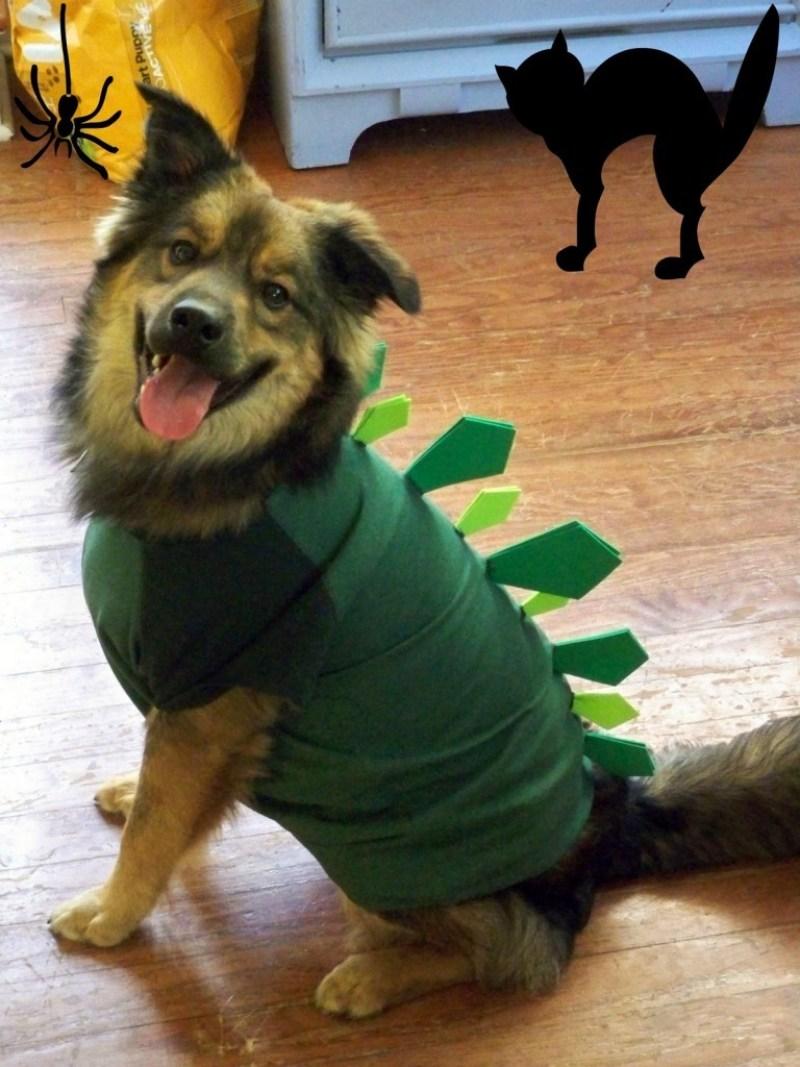 dog costumes australia
