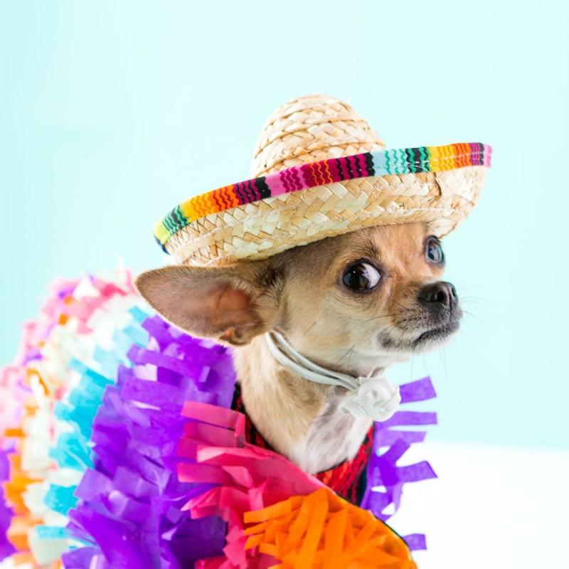 dog costumes adults