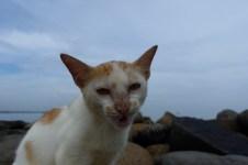 Kawan ini sedang bersantai di pantai Pekalongan, saat saya datang mengganggunya.