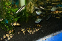 "Sekolah ikan. Eh begini, kumpulan ikan biasanya disebut ""school"", gitu."