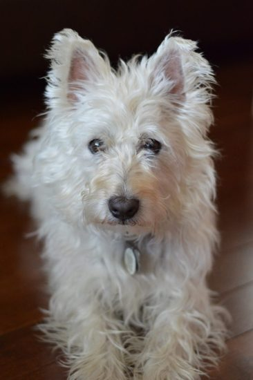 Pets in grief - how walking our dog became my life preserver