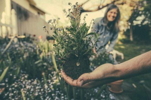 Gardening through Grief