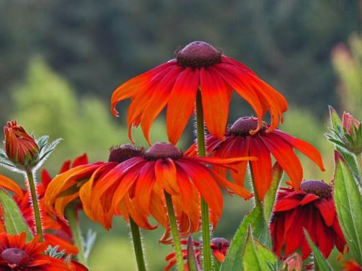 Rich Orange Flowers