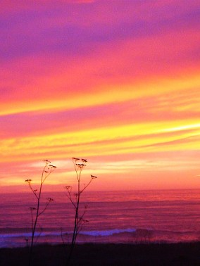 Pacific Sunset