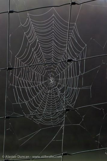 droplets on spider web