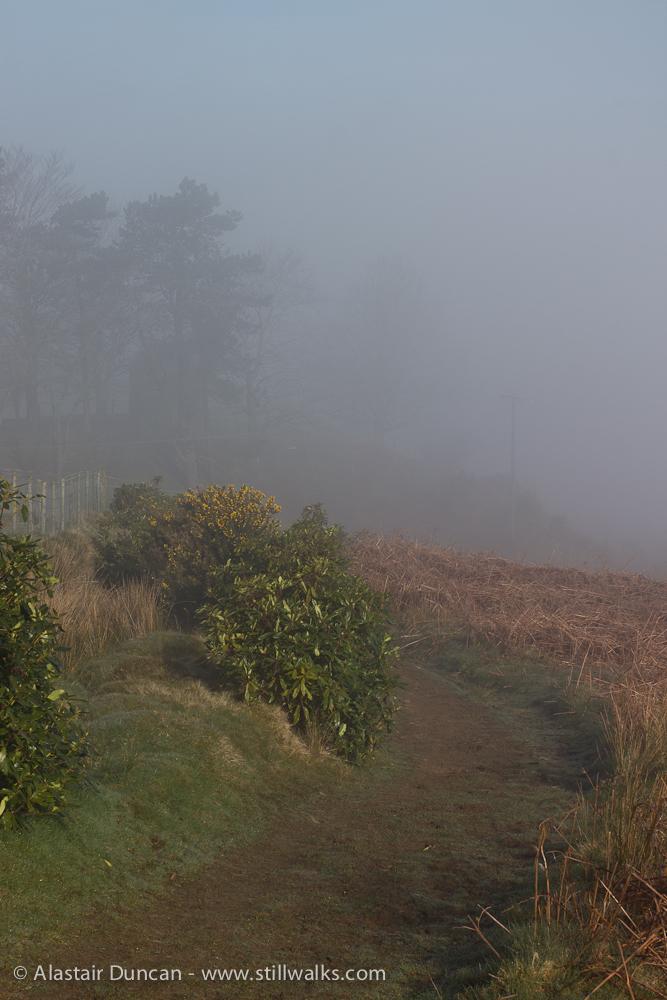 footpath into mist