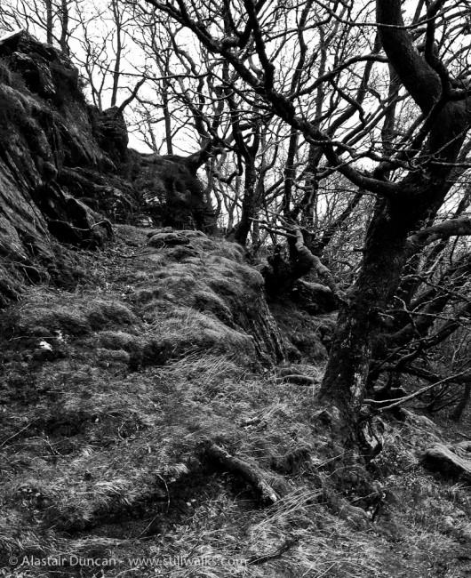 Lledr Valley - Monochrome