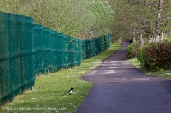 Footpath and Fence