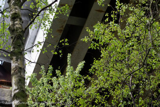 Railway Bridge and trees