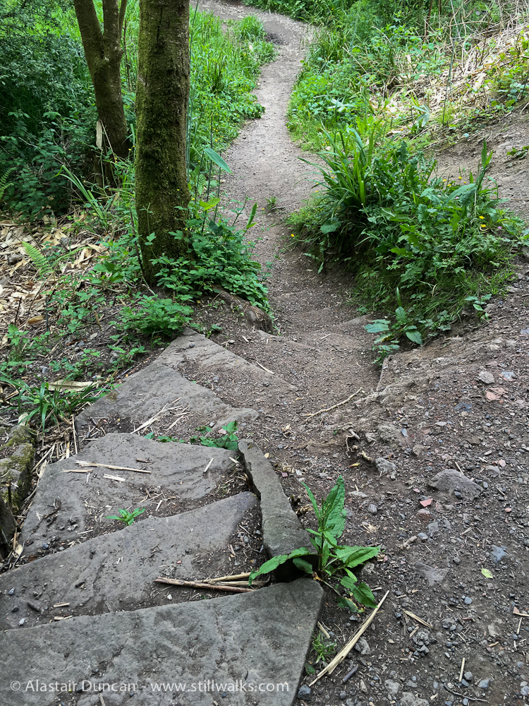 woodland footpath steps