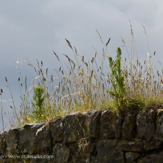 grasses and clouds