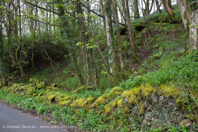 Cairnholy woodland