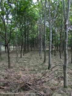 colour woodland 1