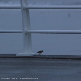 seafront bird