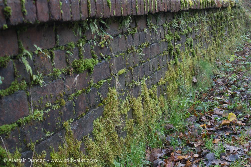 mossy bridge wall