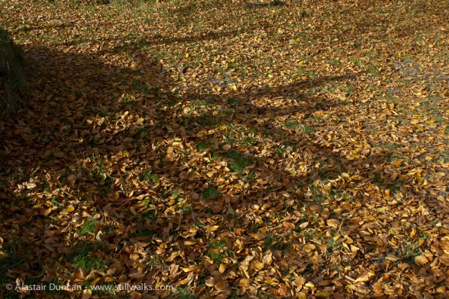 Autumn leaves and shadows