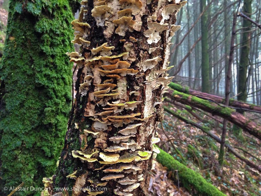 February forest fungi