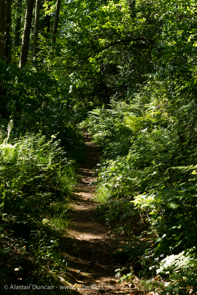 Forest footpath in June