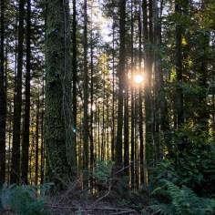 Forest October sunrise