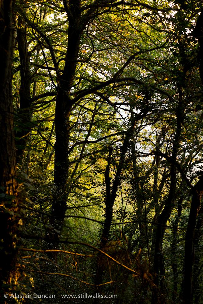 Forest September