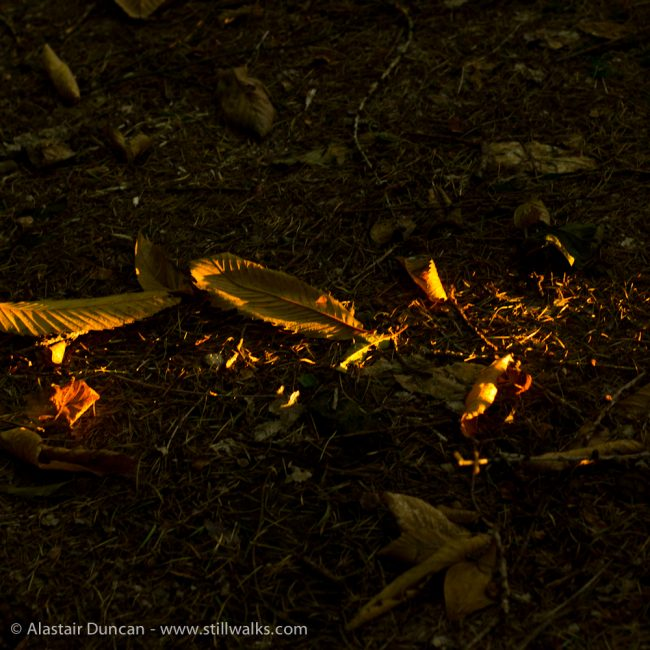 Forest September light