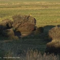 Earthy marshland feature