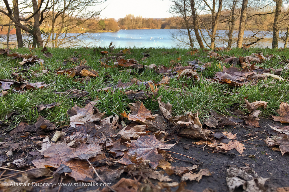 urban lakeside leaves