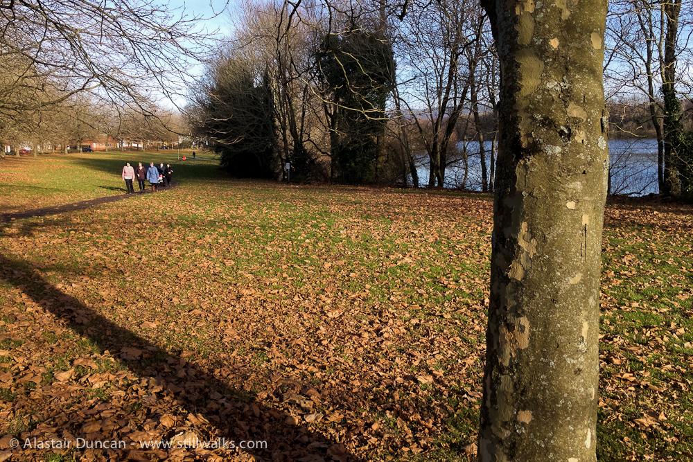 Autumn Lakeside Leaves