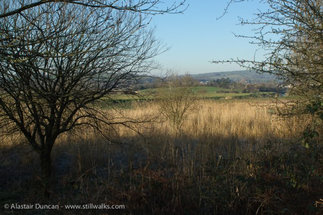 looking across the marshes