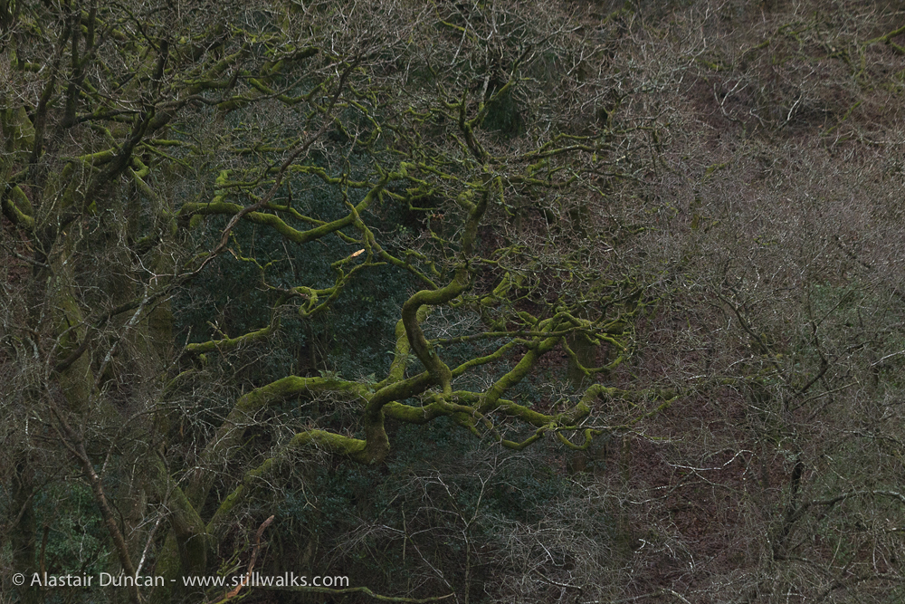 green mossy branches