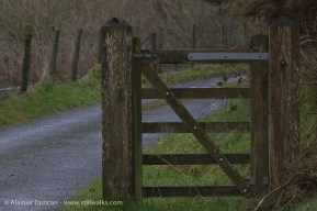 wooden gate and lane