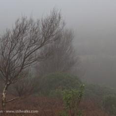 tree in heavy mist