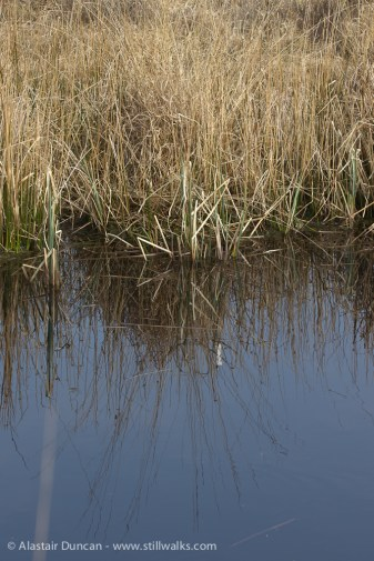 grass reflections