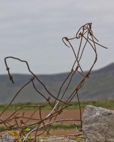 "Field fence ""sculpture"""