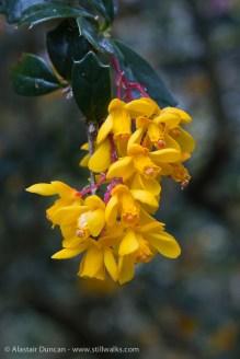 Swansea Botanic-10