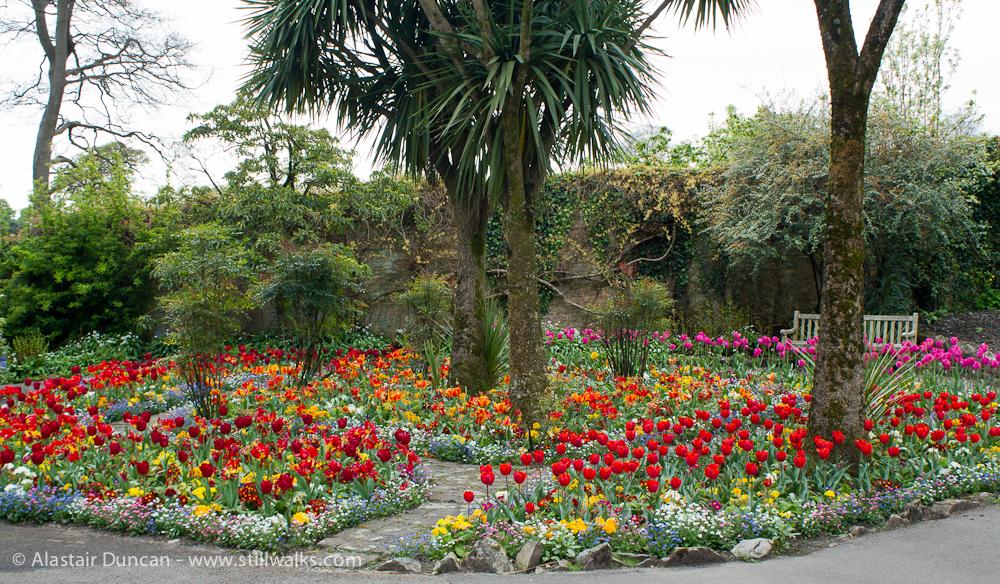 Swansea Botanic tulip arrangement