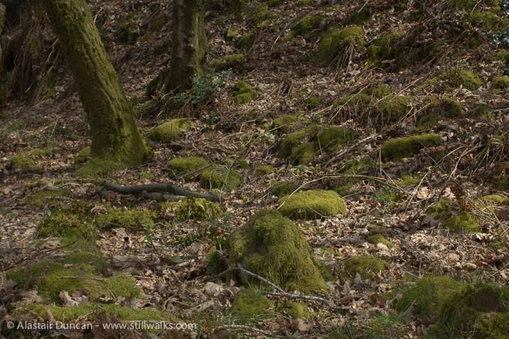 The Waterside-Felindre Woodland