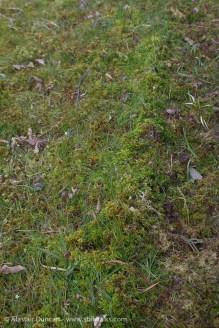 Mole moss ridge