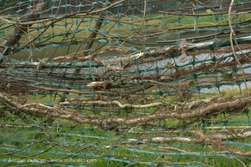 Woodland Weaving creepers