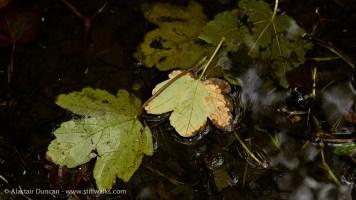 leaves in dark water trough