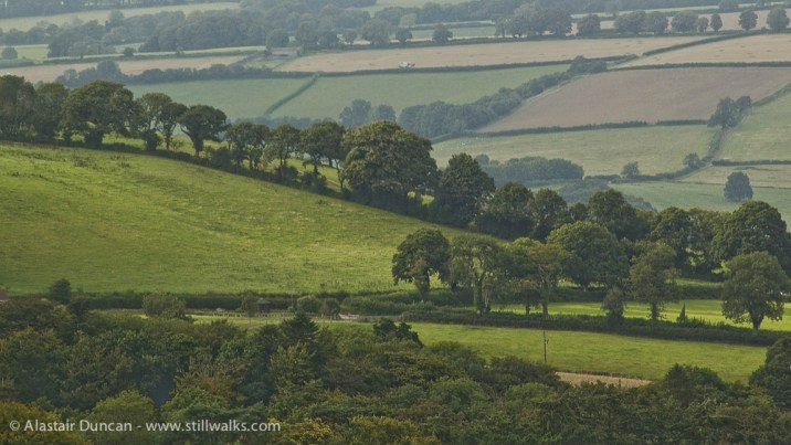 Dorset fields
